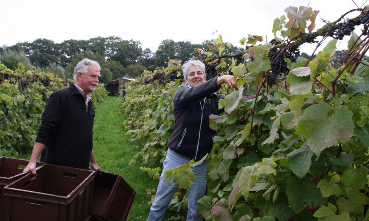 Zondag 1 mei wijnproeverij - Wijn webshop & Wijnadvies van Helène