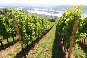 beste wijn onder 7,50 - Wijn webshop & Wijnadvies van Helène