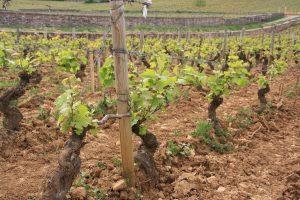 Biologische wijn kopen - Wijnadvies & webshop van Helène