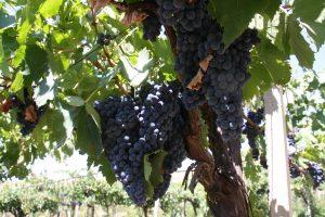 Fuedo Luparello - Wijn van Helène