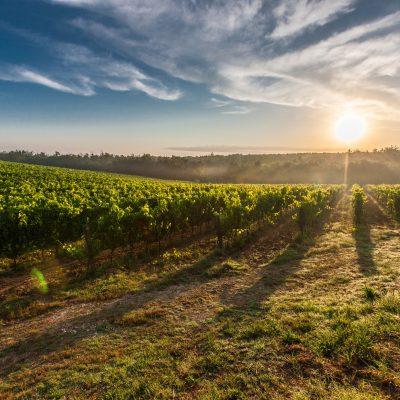 Ciù Ciù biologische wijn | Wijn van Helène wijnwebshop & wijnblog