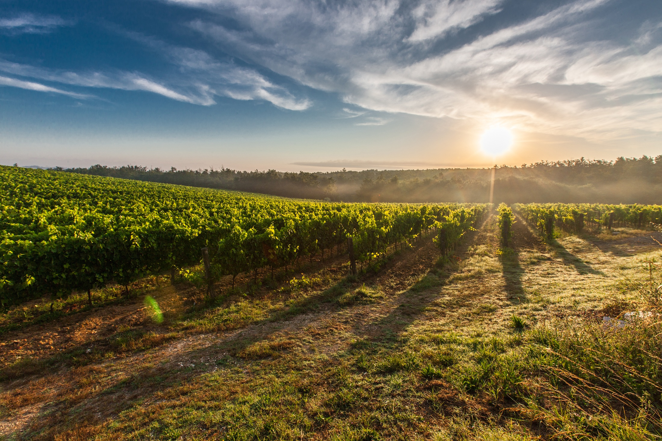 Ciù Ciù biologische wijn   Wijn van Helène wijnwebshop & wijnblog