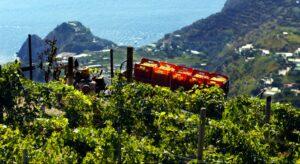 casa d'ambra wijnen - casa dambra wijn - wijn van helene - casa d ambra wijn kopen - ambra wijn online