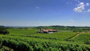 cavalchina wijn - custoza cavalchina - wijn van helene - wijn kopen - wijn webshop - italiaanse wijnen kopen - webshop italiaanse wijn